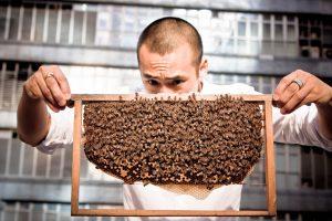 Beekeeping on a Hong Kong Rooftop (Source: www.hkhoney.org)