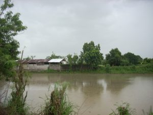 Flooded rice fields in Bustos, Bulacan in 2013 (photo by Sarah Thomas).